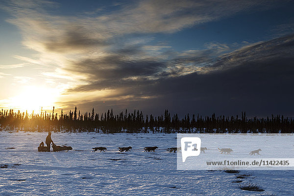 Rick Casillo runs on the trail at sunset on his way to the Cripple checkpoint during Iditarod 2016  Alaska.