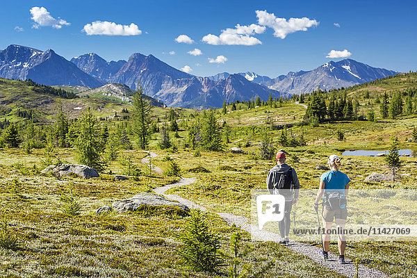 'Male and female hiker walking along a meadow trail with mountain range in the distance with blue sky and clouds; Banff  Alberta  Canada'