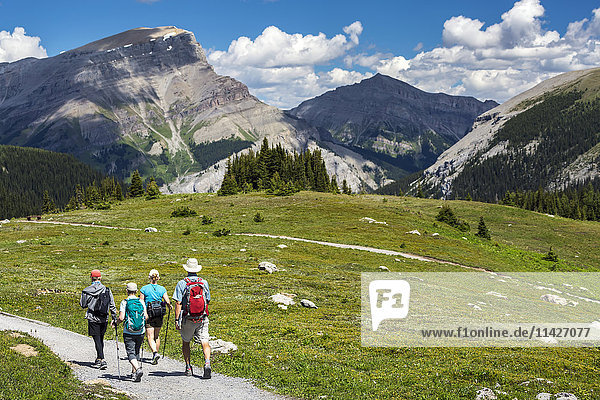 'A group of hikers walking along a meadow trail with mountain ranges in the distance and blue sky and clouds; Banff  Alberta  Canada'