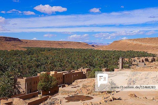 Tafilalet Oasis  Tafilalt Oasis  Gorges du Ziz  Ziz Valley  Ziz Gorges  Tafilalet region  Morocco  North Africa.