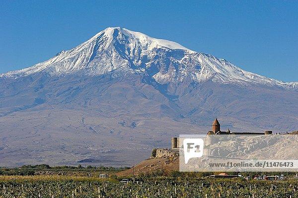 Vineyards in front of Khor Virap Monastery  Ararat plain  Mount Ararat in the background  Artashat  Armenia  Eurasia.