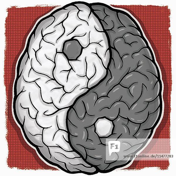 Gehirn Yin und Yang