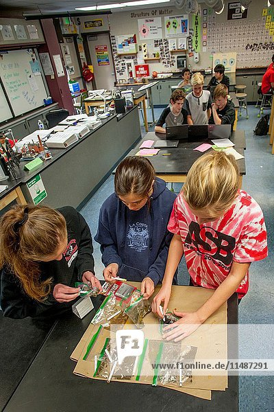 Middle school teen girls in Mission Viejo  CA  use a chemical testing kit to determine lead content of samples of local soil in STEM (Science  Technology  Engineering and Math) class. Note boys in background using Google Chromebook laptops.