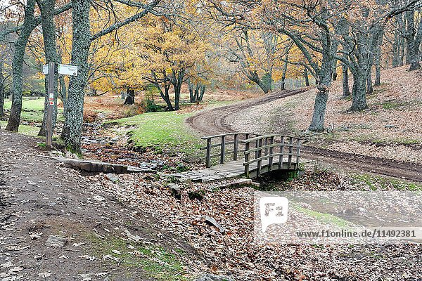 Bridge over Yedra's stream in El Tiemblo's Chestnut. Sierra de Gredos. Avila. Castilla Leon. Spain. Europe.
