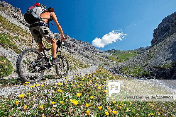 A biker in the wild Valle della Forcola in Alta Valtellina bloming with flowers  Italy.