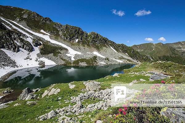 Rhododendrons and lakes Porcile Tartano Valley Orobie Alps Lombardy Italy Europe.