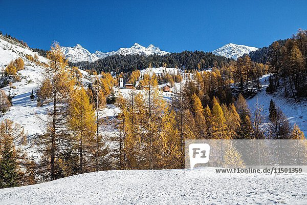 Snowy landscape and colorful trees in the small village of Sur Val Sursette Canton of Graubünden Switzerland Europe.