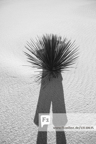 Photographer's self portrait and shadow on sand dune and yucca  White Sands National Park