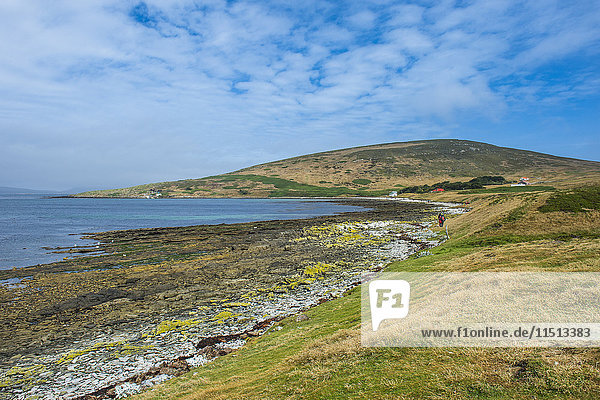 Pretty bay in Carcass Island  Falkland Islands  South America