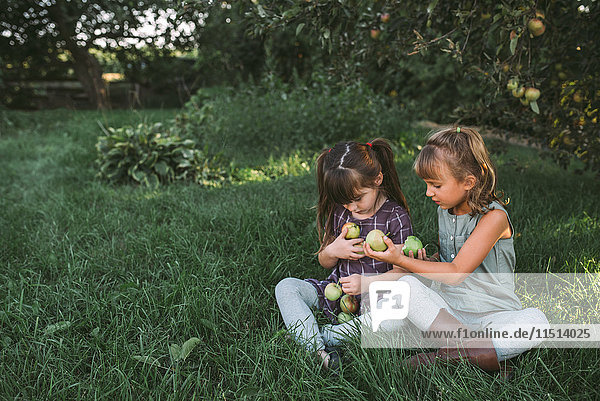 Two young girls collecting apples on farm
