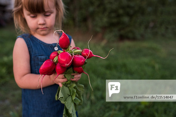 Young girl holding bunch of fresh radishes