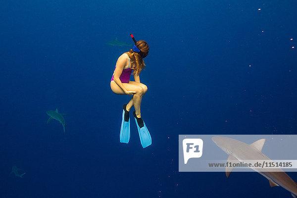 Unterwasseransicht einer Frau beim Schnorcheln mit Meereslebewesen  Oahu  Hawaii  USA