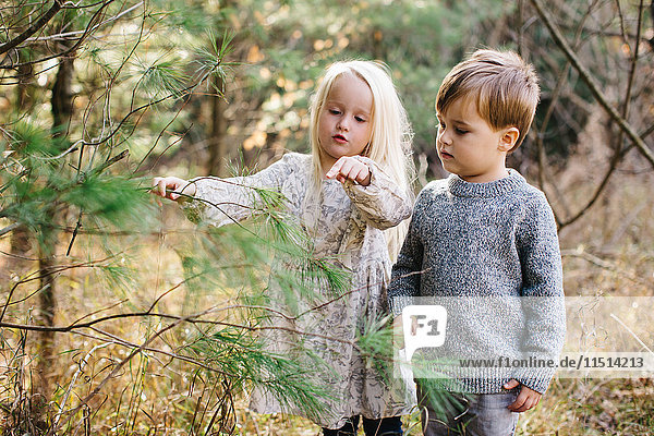 Siblings looking and pointing at tree in forest