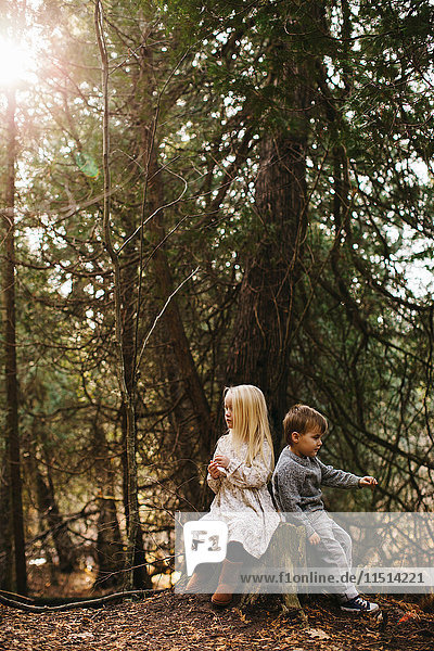 Siblings sitting on tree stump in forest