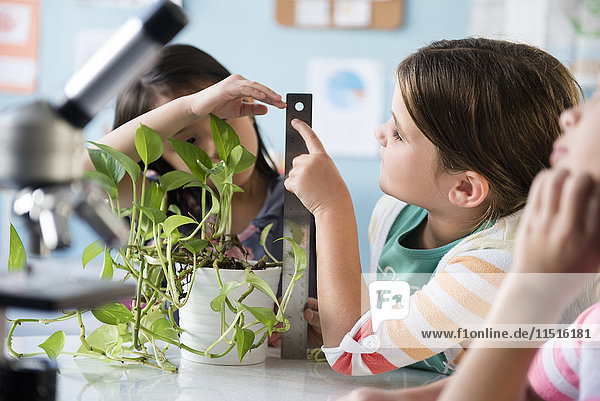 Girls measuring growth of plant in classroom