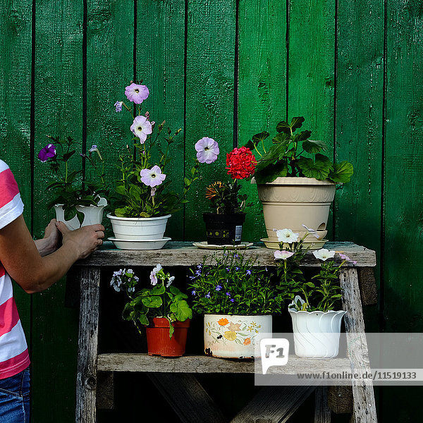 Frau arrangiert Blumentopf auf Gestell