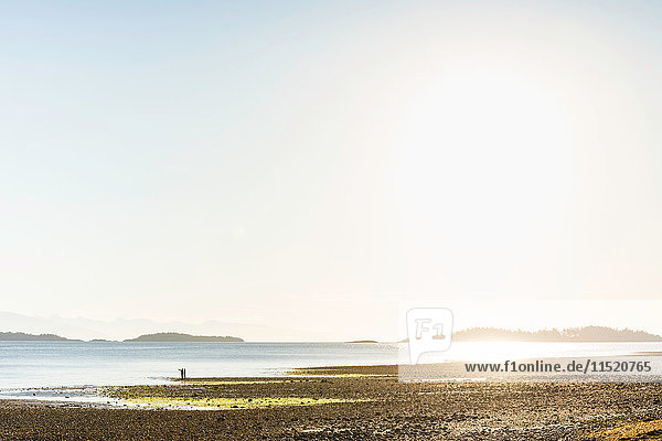 Distant view of couple on beach at Rathrevor Beach Provincial Park  Vancouver Island  British Columbia  Canada