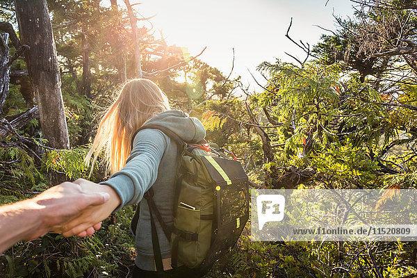 Female hiker leading boyfriend through forest  Pacific Rim National Park  Vancouver Island  British Columbia  Canada