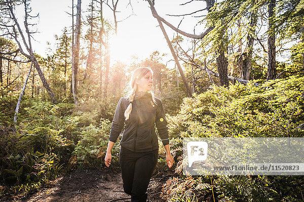 Wanderin wandert durch sonnenbeschienenen Regenwald  Pacific Rim National Park  Vancouver Island  British Columbia  Kanada