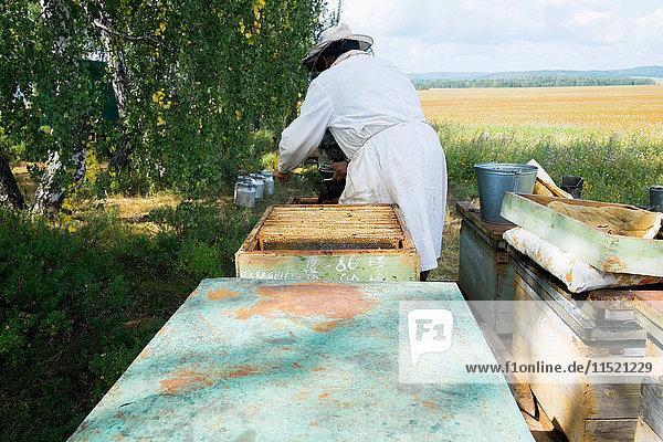 Male beekeeper monitoring apiary in field