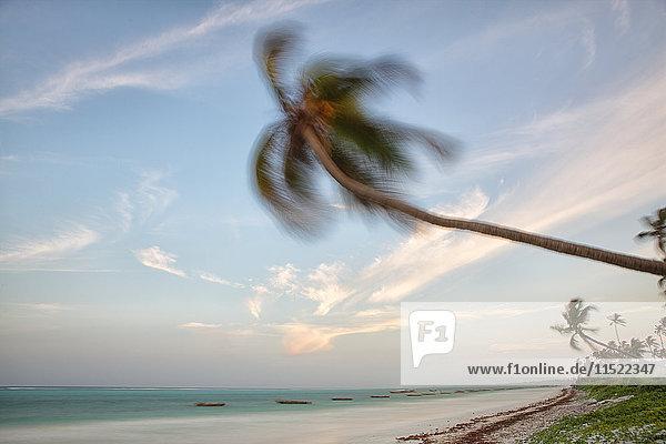 Tansania  Sansibar Island  Matemwe Beach  vom Wind bewegte Palmen