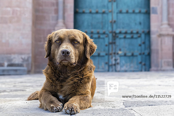 Peru  Cusco  streunender Hund Peru, Cusco, streunender Hund