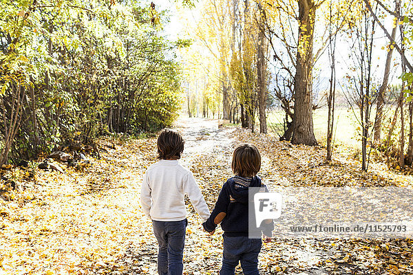 Back view of two little boys walking hand in hand on autumnal country road