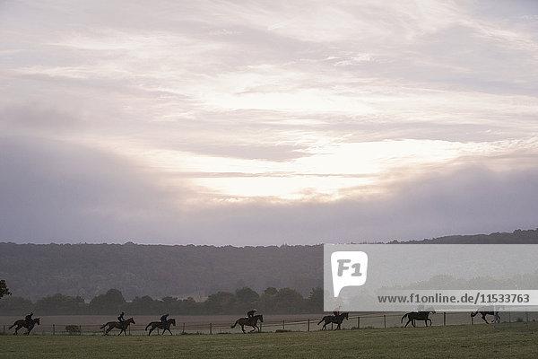 Gruppe von Menschen auf Pferden  die über ein Feld reiten  unter einem dämmrigen Himmel. Übung am frühen Morgen  Training der Rennpferde.