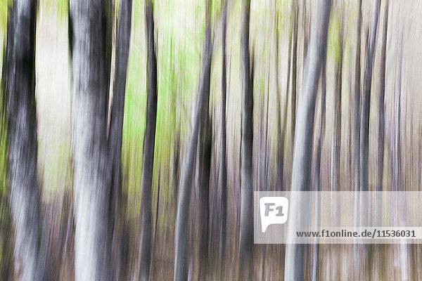 Blurred  abstract tree pattern  France