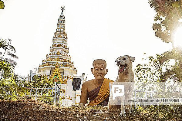 Thailand  Phuket  Blick zum Nai Harn Tempel mit Buddhastatue und Hund im Vordergrund Thailand, Phuket, Blick zum Nai Harn Tempel mit Buddhastatue und Hund im Vordergrund