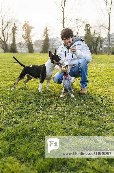 Junger Mann spielt mit seinen Hunden auf einer Wiese