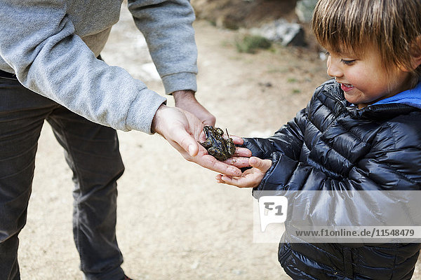 Father showing his little son a frog sitting on his hand
