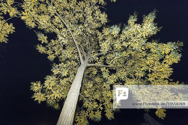 Baum bei Nacht  geblitzt