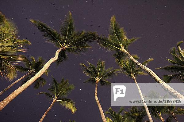 Karibik  Dominikanische Republik  Sternenhimmel und Palmen am Bavaro Beach
