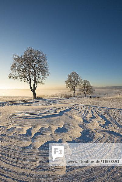 Deutschland  Baden-Württemberg  Landkreis Konstanz  Winterlandschaft mit Schneeverwehung