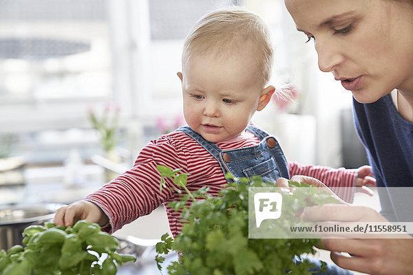 Mutter und kleines Mädchen untersuchen Kräuter in der Küche