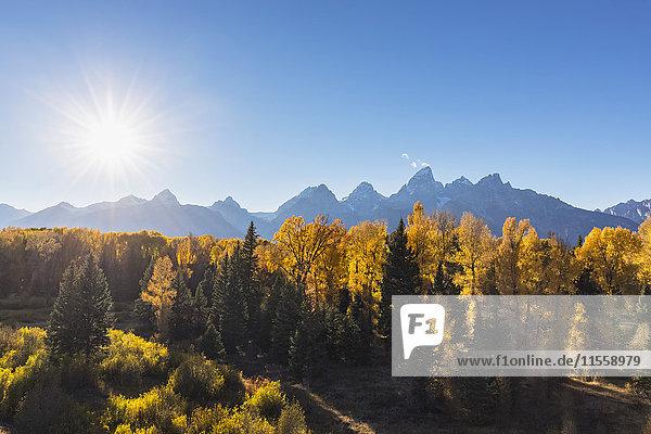 USA,  Wyoming,  Rocky Mountains,  Grand Teton Nationalpark,  Cathedral Group und Espen im Herbst
