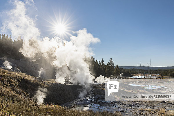 USA  Yellowstone Nationalpark  Norris Geysirbecken