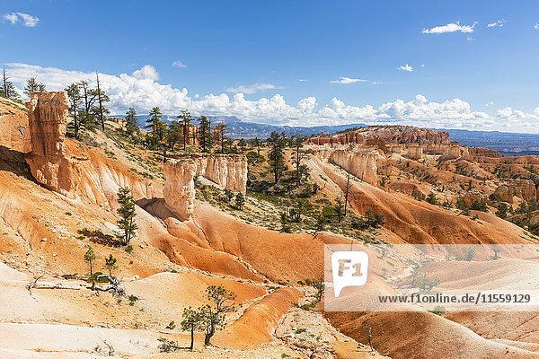 USA  Utah  Bryce Canyon Nationalpark  Hoodoos vom Navajo Loop Trail aus gesehen