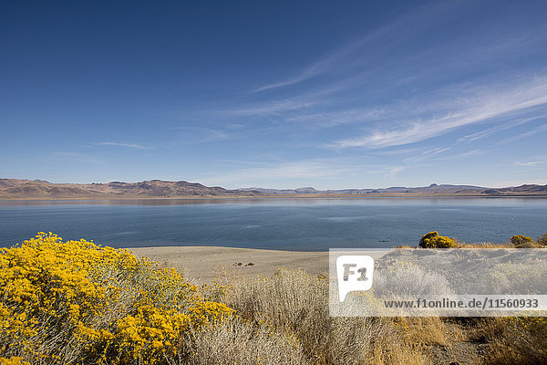 USA  Nevada  Pyramid Lake