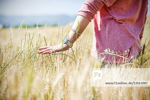 Hand der jungen Frau beim Berühren von Stacheln im Getreidefeld