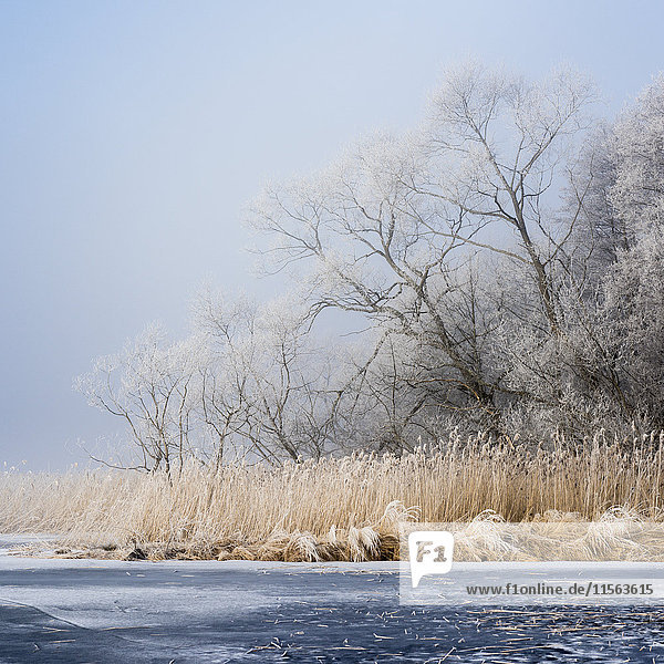 Sweden  Sodermanland  Winter landscape with frozen river and trees