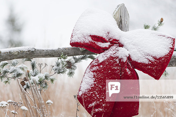 'Fresh snow on holiday bow and decorations on fence post  Christmas season; Minnesota  United States of America'