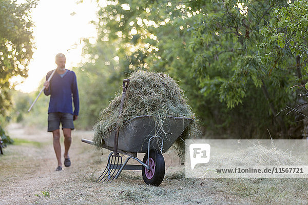 Farmer by wheel barrow with hay