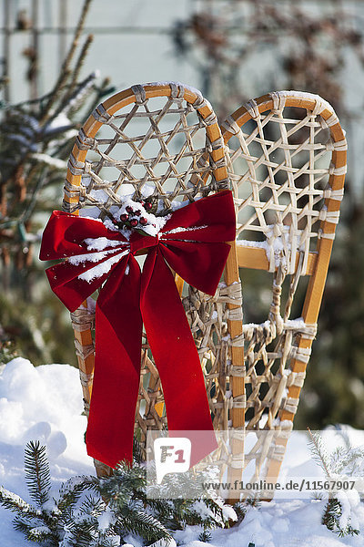 'Holiday decoration on old pair of snowshoes  Christmas season; Minnesota  United States of America'