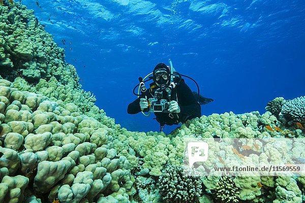 Taucher mit Kamera schwimmt über große Porenkorallen (Porites nodifera)  Rotes Meer  Sharm el Sheikh  Sinai-Halbinsel  Ägypten  Afrika