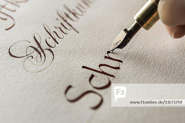 Kalligraphie-Atelier  Hand schreibt Text mit Tinte  Federhalter und Bandzugfeder  Antiqua Schrift auf Ingres Papier  Seebruck  Oberbayern  Deutschland  Europa