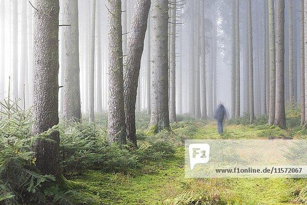Nebel im Wald  Unterallgäu  Bayern  Deutschland  Europa Nebel im Wald, Unterallgäu, Bayern, Deutschland, Europa
