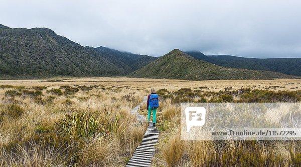 Wanderin auf Wanderweg durch Sumpflandschaft  Pouakai Circuit  Egmont Nationalpark  Taranaki  Nordinsel  Neuseeland  Ozeanien