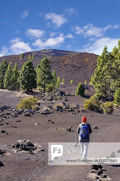 Frau auf Wanderweg  Montaña Negra oder Vulkan Garachico  Lavagebiet bei El Tanque  Teneriffa  Kanarische Inseln  Spanien  Europa